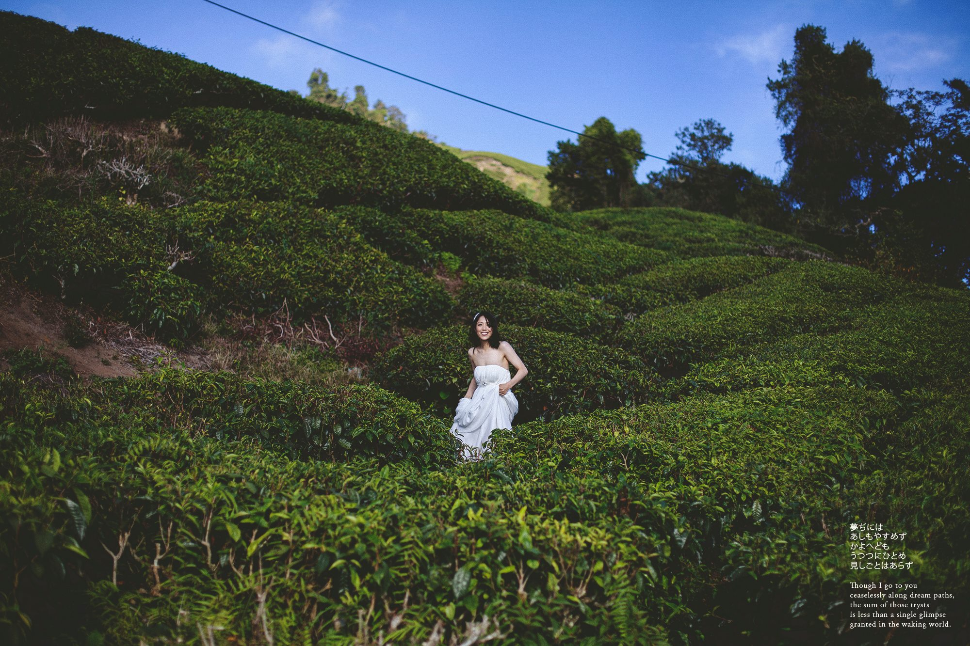 Bride in boh tea plantation at Cameron Highland