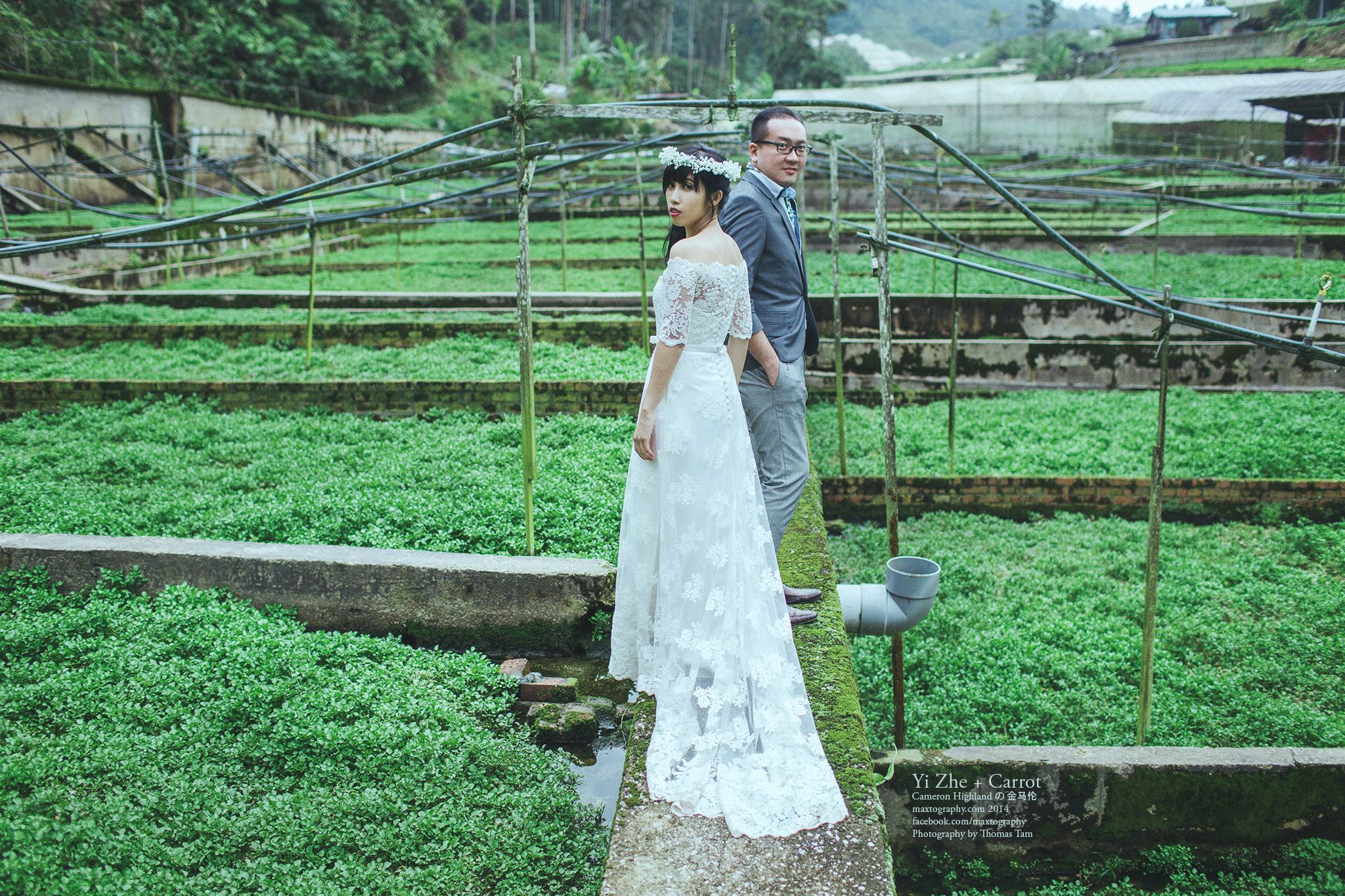 Couple standing pose at the farm Cameron Highland