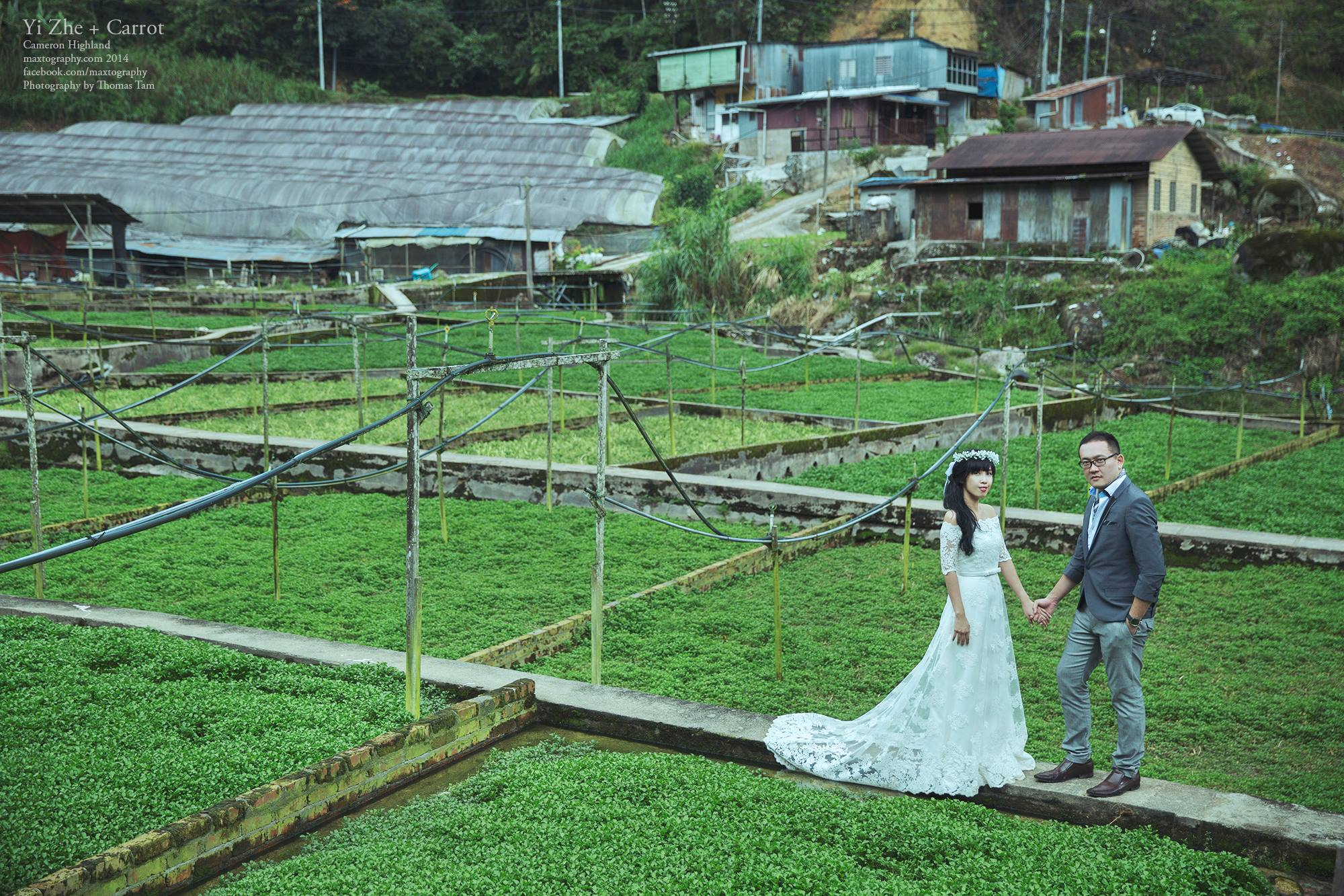 couple standing at farm terrace Cameron Highland