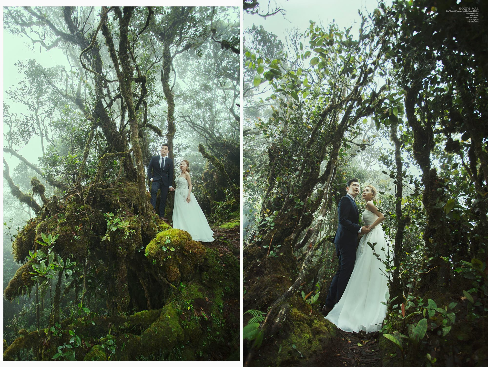 Couple standing on the Mossy tree at Cameron Highland
